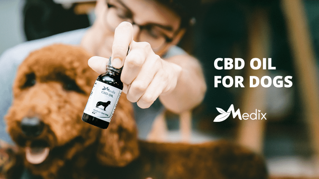 Cbd Oil For Pets Statistics: These Numbers Are Actual